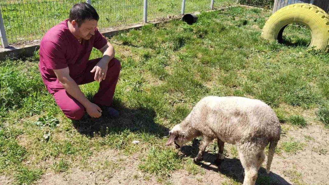 Община Русе спаси изгубено агънце на Гергьовден