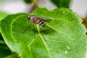 Продължава пръскането срещи комари и кърлежи на територията на Община Русе