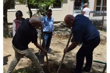 Засажадене на дървета в двора на бъдещия Център за медико-социални грижи