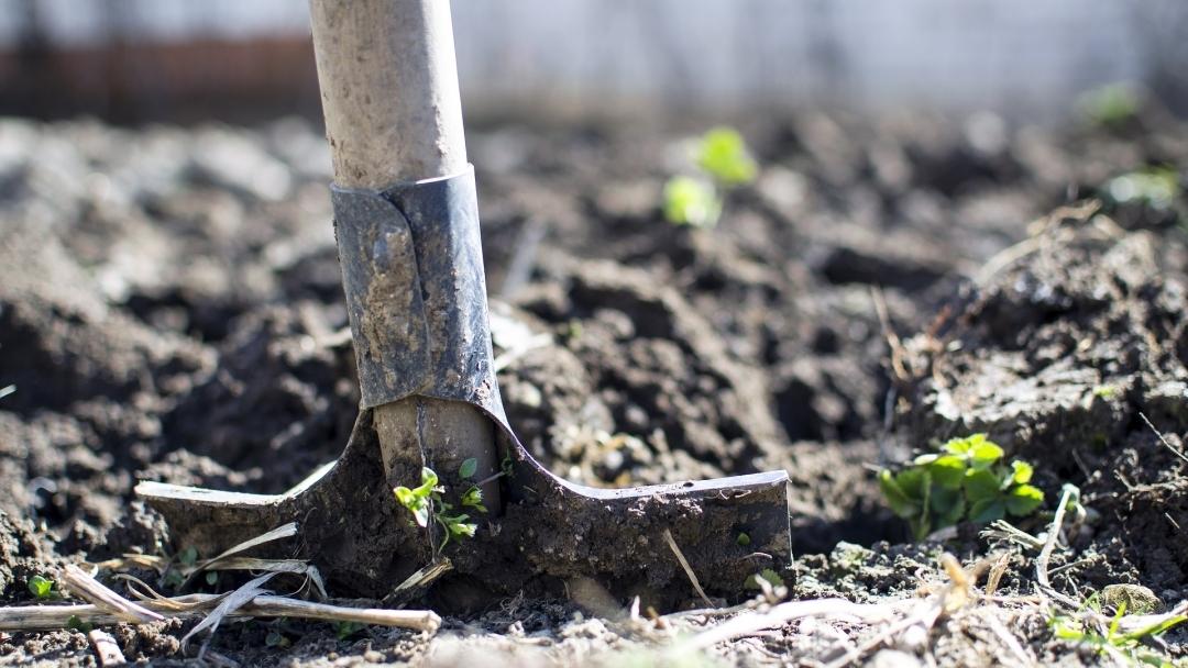 1200 дръвчета ще бъдат засадени в Седмицата на гората