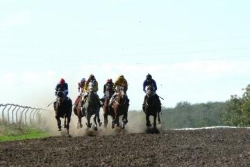 Близо 60 от най-елитните коне в България премериха сили на хиподрумната писта в с. Сандрово