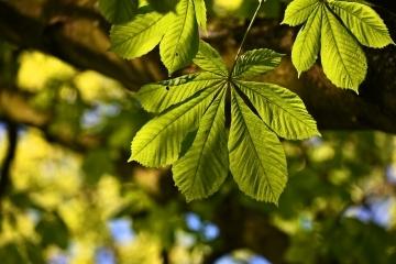 Предстоят дейности по растителна защита