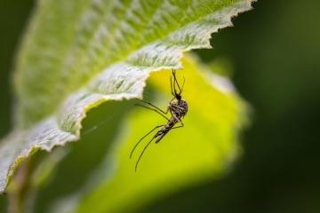 Предстои дезинсекция срещу комари в Мартен