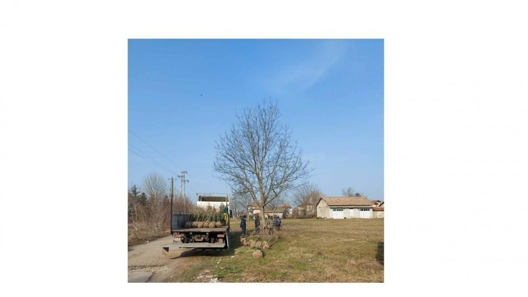 Община Русе засади в Мартен 70 дарени дървета